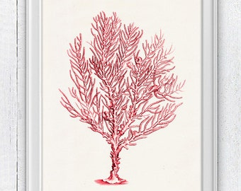 Sea fan coral no.10 -Seafan in red - sea life print -Marine  sea life illustration A4 print SPC051