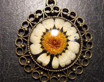 Black Back Real Daisy Flower Preserved Specimen Necklace