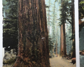Whatcom Falls, Bellingham Washington, Wash Forrest, Columbus Tree, 2 Postcards, FREE SHIPPING