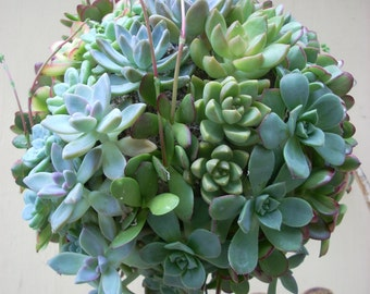 Succulent Orb Kissing Ball 7 inch diameter