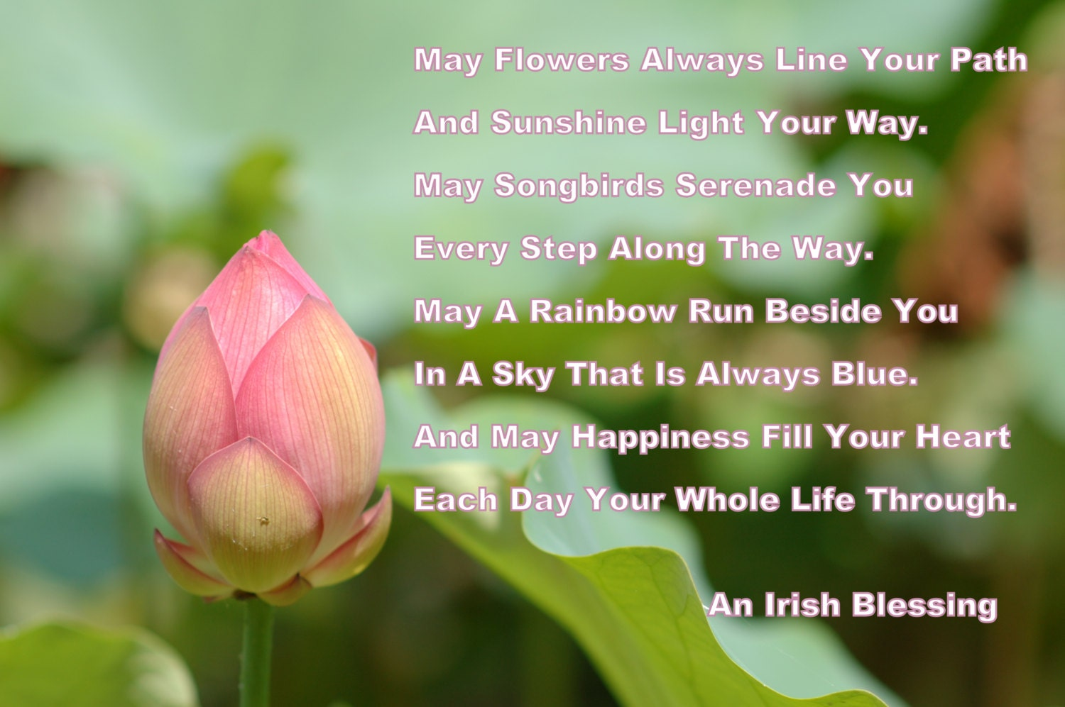 Lotus Flower Poems Quotes