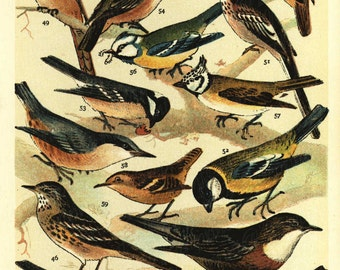 Antique Original Lithograph of Various Birds  From British Birds published in 1890 - Gorgeous collectibles -