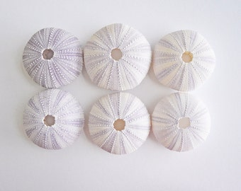 Set of 6 Purple Sea Urchins. Size 1-3/4 to 2 inches