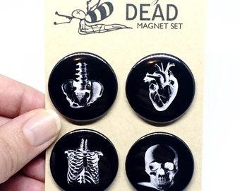 Anatomy Badge/Magnet Set