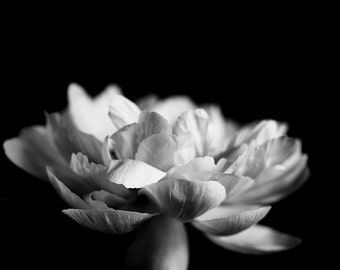 Black  White Flower Photograph, White Flower, Large Art Print, BW Photograph, Bedroom Print, Wall Art, White Floral Print, Peony, Peonies