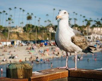 Seagull on the pier in Oceanside, California - Photography Fine Art Print or Wrapped Canvas