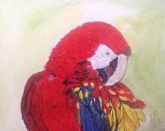 Scarlet Macaw painted on canvas