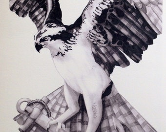 Osprey and Anchor Pencil Giclee Print