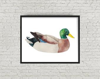 Watercolor Mallard Duck Print