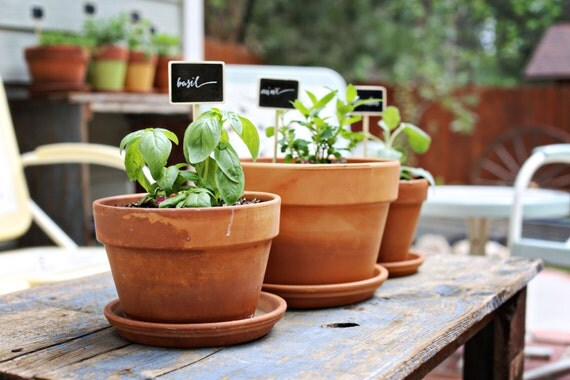Chalkboard Garden Stakes   Set Of 5 Herb Markers   Choose From 18 Options    Signs   Stands   Basil   Oregano   Chives   DearSeed   Dear Seed