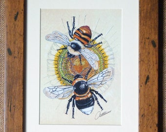 Bee Picture  Bee Print  Framed Bees  Bumble Bee and Carder Bee - 'Duo Bees on Daisy' a framed print on quality Chrystal Archive paper.