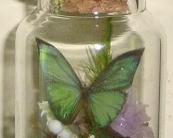 Miniature Glass Butterfly Terrarium