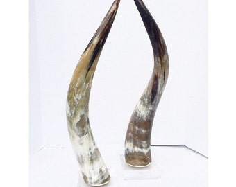 Standing Longhorns on Lucite Base