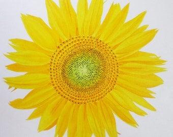 Sunflower Original Artwork Acrylic Painting
