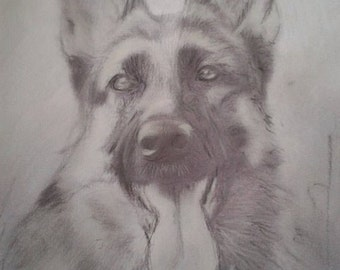 German shepard dog portrait