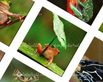 Digital Collage Sheet 1 inch square Frog Nature  Original  Printable 4x6 inch sheet 168