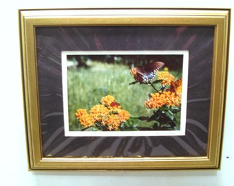 Butterfly Picture, Monarch Butterfly, Winged Insects, Gold Tone Frame, Wall, Nature, Butterfly, Decor, Photo, Print, Nature Photography, Art