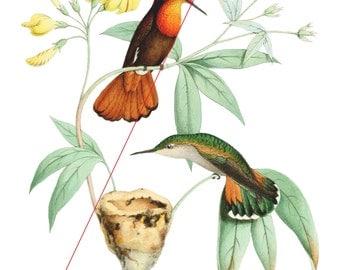 Hummingbirds - Temporary tattoo