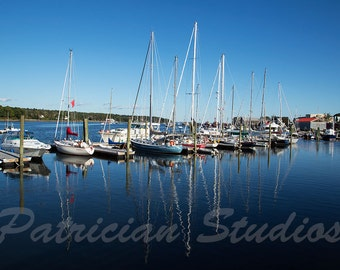 Sail Boats in Harbor,  Belfast, Maine