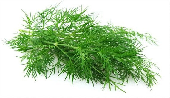 how to cook fennel plant