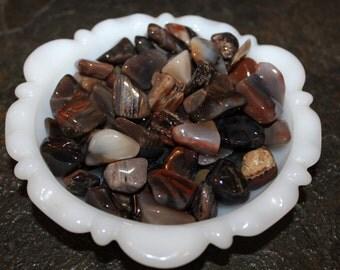 Petrified Wood -Tumbled Stone - Small