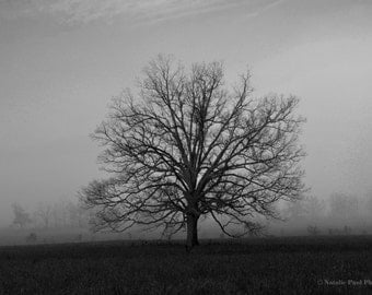 The Tree in Cades Cove in Black and White