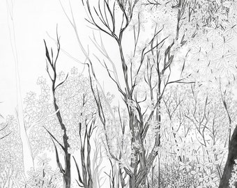 Tree Print, Forest Print, woodland prints, tree art wall decor, woodland art, beautiful intricate pencil illustration, in black & white, new