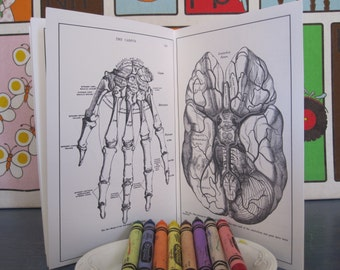 Anatomical Adult Novelty Book for the Curious, Vintage Illustrations, Use for Coloring, Painting, Perusing on a Rainy Day, Weirdo Gift