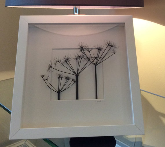 Wooden Box Wall Decor : Wooden box framed wild cow parsley wall art by tokidokime