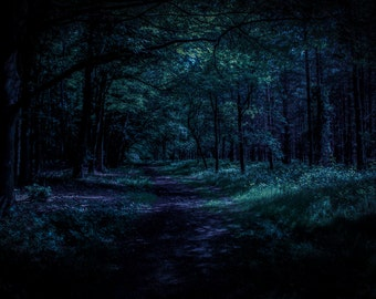 Dawn in the Forest. An original fine art photographic Giclée print of dawn breaking in the wild woods.