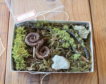 From the Forest Floor : Terrarium kit of Moss and Bits