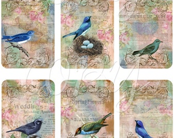 Instant Download  - Beautiful Birds - ACEO - Digital Download - Printable  Digital Collage Sheet