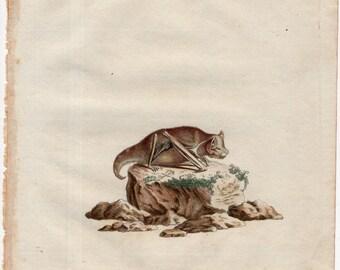 1775 ANTIQUE BAT ENGRAVING print original antique hand colored engraving - vespertilio lasiurus - by Schreber