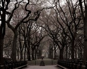 Central Park Photography, Brown, Black, Neutral, New York Print, The Mall, Trees, Central Park Print, Men