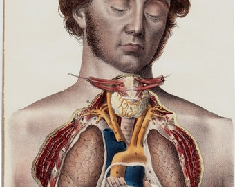 1844 Antique print ANATOMY by Lemercier, lithograph of dissection of a dead young man with sideburns, open chest, heart, veins