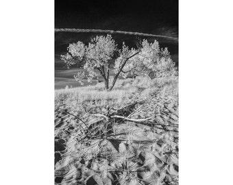 Infrared Photo with Trees on a Sand Dune at Ottawa Beach State Park in Holland Michigan No.BW005 Fine Art Black and White Photography