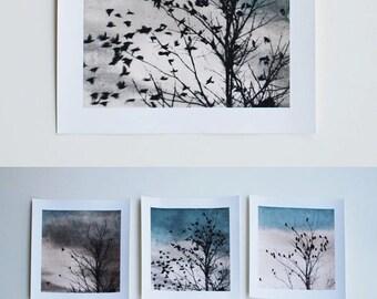 bird art, giclee print, Doves Fly Away, 88 editions art