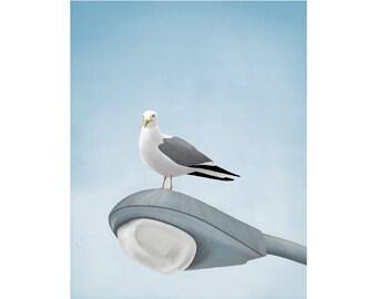 Art Print, 8x10, Illustration Print, Seagull Art, Beach Cottage Decor, Coastal Art
