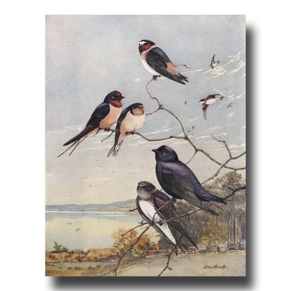 Vintage Bird Art Rustic Wall Art 1930s Print Barn