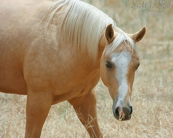 Palomino Horse Print, rustic western decor, horse love gifts under 25, animal photography, fine art color or sepia photo