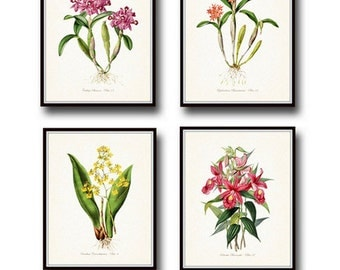 Tropical Orchids Botanical Print Set No. 2, Giclee, Art, Print, Beach Decor, Coastal Art, Tropical Flower Prints, Orchid Prints,Illustration