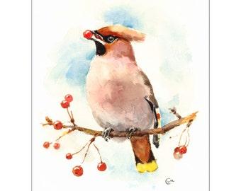 Watercolor Bird Waxwing - Original Painting 8 x 10 Nature