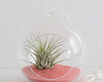 Set of 10 Air Plant Terrarium Kit with Salmon Sand - Great for Weddings, Bridesmaids, Parties, and Shower Gifts