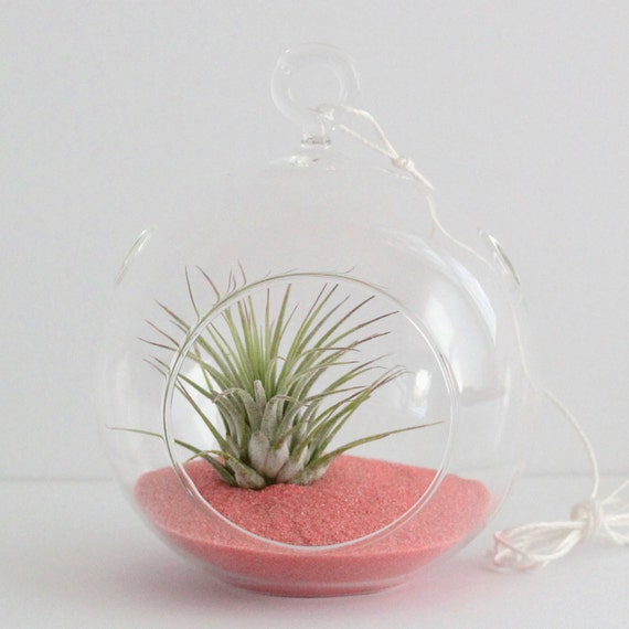 Set of 5 Air Plant Terrarium Kit with Salmon Sand - Great for Bridesmaids, Parties, and Shower Gifts