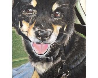 5x7 Custom Pet Portrait / Custom Dog Portrait / Custom Colored Pencil Pet Portrait