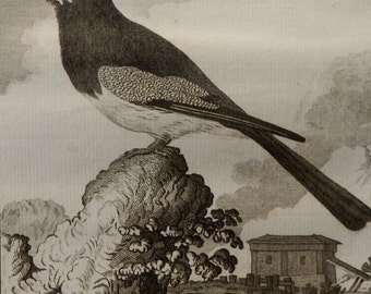 1782.Antique print.Natural History of Buffon.Steel engraving.Blue-crowned trogon.230 years old print.Birds.6.8x9.8 inches, 25x17 cm.
