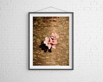 Fine Art Photography Print - Flower, Nature - Cherry Blossom on Tree Trunk - Washington, DC, USA