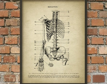 Human Skeleton #1 - Human Anatomy Wall Art Poster - Human Bone Structure - Skeletal System
