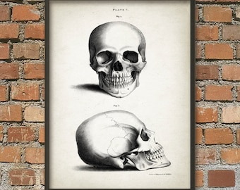Human Skull Print - Antique Skull Anatomy Wall Art Poster #4- Vintage Skull - Human Anatomy Art Print - Skull Poster