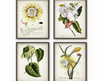 Antique Botanical Art Print Set of 4 - Vintage Botanical Home Decor - Antique Book Plate Illustration - Giclee Yellow Flowers Picture (AB56)